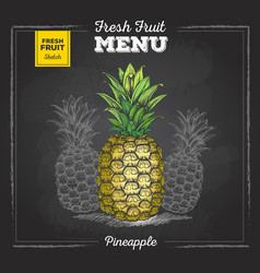 realistic chalk drawing tropic fruit pineapple vector image