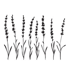 Set of hand drawn lavander flower silhouette vector