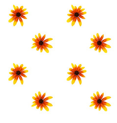 colorful yellow echinacea on white background vector image