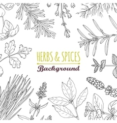 Hand drawn herbs and spices background Culinary vector image