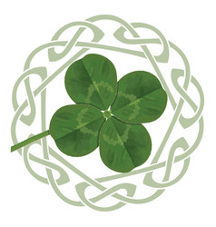 Lucky four leaf clover in the celtic style vector