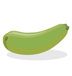 squash vector image vector image
