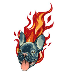 Bull dog flame tattoo in beast mode vector