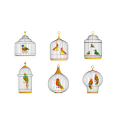 colorful parrots in cages collection cute birds vector image