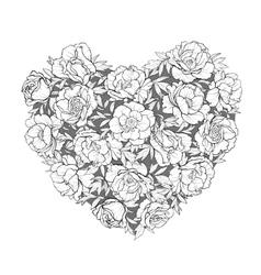 heart of peonies vector image