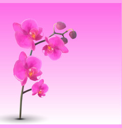 Naturalistic beautiful colorful pink orchid vector