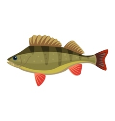 Perch perca fluviatilis percidae fish vector
