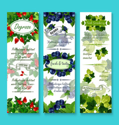 banners of fresh berries for berry shop vector image