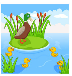 mother duck swims with her four little ducklings vector image