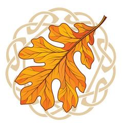 Oak leaf in autumn coloring and celtic magic vector