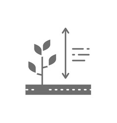 Plants growing plant height grey icon vector