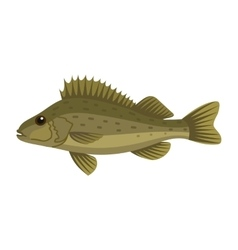 Ruffe pope eurasian fish vector