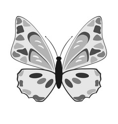 black and white butterfly on a white background vector image