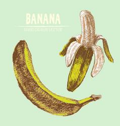 digital detailed banana vector image