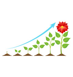Growing stages cycle vector