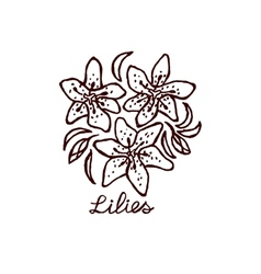 Handsketched bouquet of lilies vector image