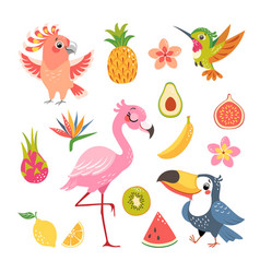 Tropical fruit and birds vector