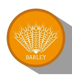 Barley grains design vector image