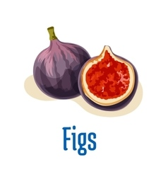 Fresh figs whole and half cut emblem vector