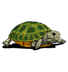 turtle iconcartoon icon isolated on vector image