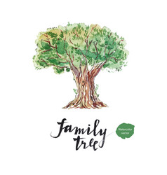 family tree old olive vector image