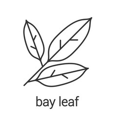 Bay leaves linear icon vector