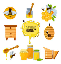 Colorful pictures of honey bumble and different vector