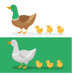 ducklings and mother duck ducks family duckling vector image