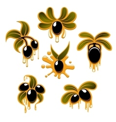 Olive branches with black fruits and oil drops vector image
