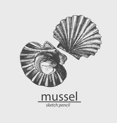 Sea mussel a marine resident sketch vector