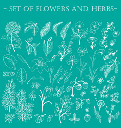 Set of hand-drawn wildflowers vector