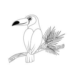 Colorless funny cartoon toucan vector