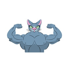 Strong cat Power animal bodybuilder Pet with big vector image vector image