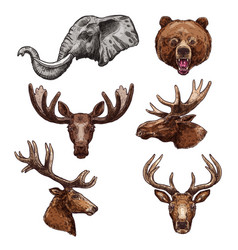 african animal and forest mammal sketch set vector image vector image