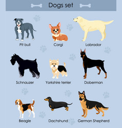 cute funny cartoon dogs vector image