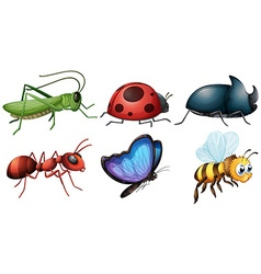 different type of insects vector image