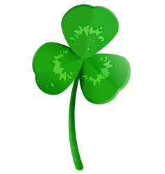 green shamrock clover leaf with dew drops lucky vector image