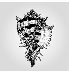 Hand drawn vintage sea shell vector