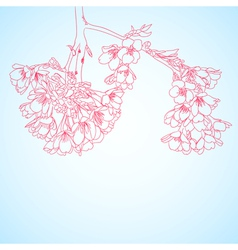 outline cherry flowers vector image