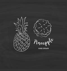 Pineapple fruit graphic drawing sketch vector