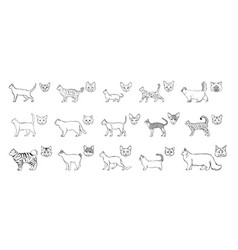 Set of cats breeds side view muzzle collection vector