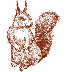 Sketch of a squirrel vector
