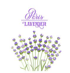 Lavender elegant card vector