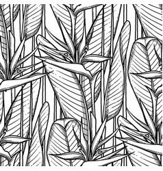 Graphic strelitzia pattern vector