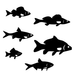 river fish vector image