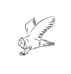 sketch of an owl vector image