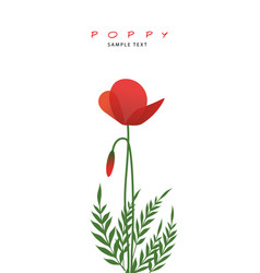 stems leaves and poppy flowers isolated on white vector image