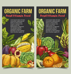banner or flyer with vegetables and fruits vector image