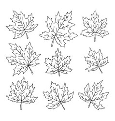 Beautiful set doodle maple leaves isolated vector