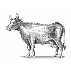 Black cow vector